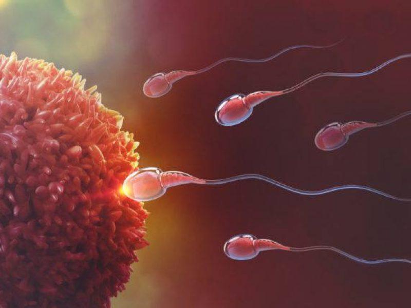 Consulta de Apoio Natural à Fertilidade